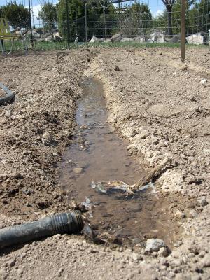 garde hose watering